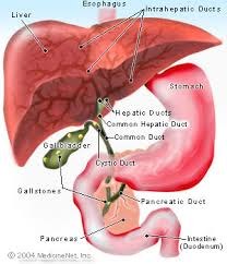 Gallbladder and Biliary Disease