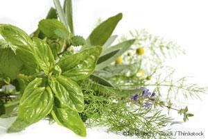 Medicinal Plants for Modern Health Care